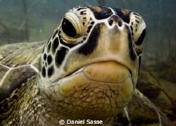 Hey Dude! Green Turtle. by Daniel Sasse