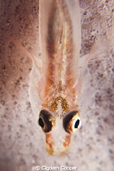 Ghostgoby, Canon G10 with Ikelite Housing, Ikelite DS161 ... by Cigdem Cooper