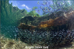 Baitfish galore on this beautiful day! by Katy Danca Galli