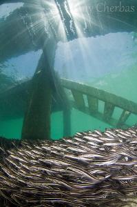 Stairway to Catfish Heaven by Tony Cherbas