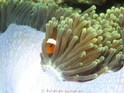 This Photo was taken in Bengalon Reef Nov 2010, East Kali... by Johanan Burhanan