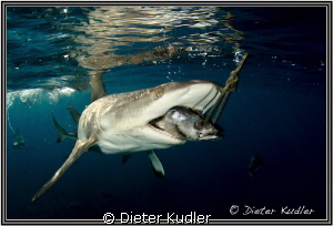 The Snack by Dieter Kudler