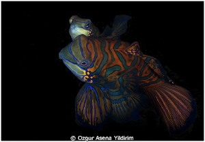 from lembeh by Ozgur Asena Yildirim