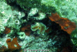 Two sea worms - a hidden and other acting by Georgi Petsov