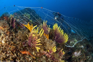 fishing nets on Paramuricea clavata (Costa Brava) by Mathieu Foulquié