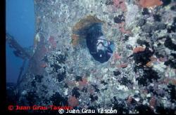 GIANNIS D by Juan Grau Tascón