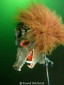 A Scary Sight (1) at the Welland Scuba Park. by David Gilchrist