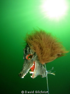 A Scary Sight (2) at the Welland Scuba Park by David Gilchrist