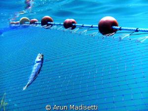 The last one.. by Arun Madisetti