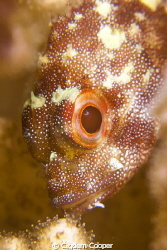 Yellow spotted scorpionfish in Pocillopora coral (it was ... by Cigdem Cooper