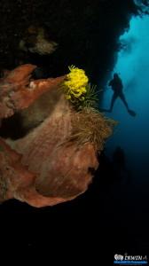 Sponge and Diver Canon Powershot S100  Fisheye Fix S100... by Irwin Ang