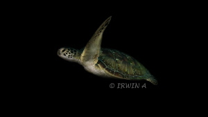 Green Turtle Canon Powershot S100  Fisheye Fix S100 Hou... by Irwin Ang