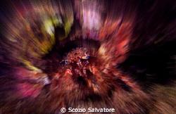 eyes by Scozio Salvatore