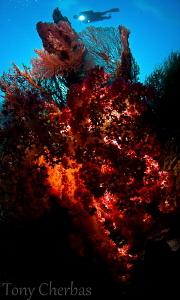Ocean Heart by Tony Cherbas