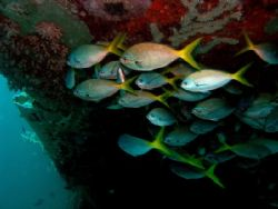 These Fusiliers like to hang out under the wing of the B-... by Jan Messersmith