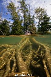 Zebra mussels growing on the shoreline in Elk Lake, Michigan by John Peal