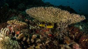 Yellow Butterflyfish Canon Powershot S100  Fisheye Fix ... by Irwin Ang