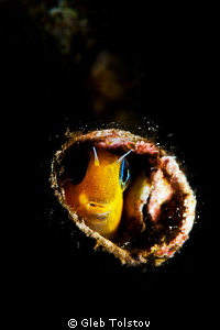 In a hole by Gleb Tolstov