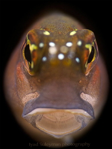 """""""Blenny Portrait"""" Taken with +15 wet diopter by Iyad Suleyman"""