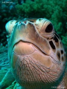 Turtle by Stéphane Primatesta