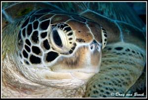 turtle portrait by Dray Van Beeck