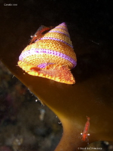 Snail by Stéphane Primatesta