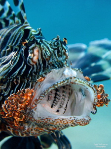 Lionfish by Iyad Suleyman