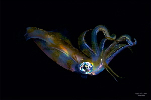 squid by Iyad Suleyman