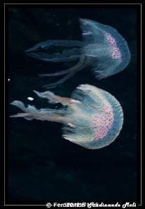 Jelly reflections by Ferdinando Meli