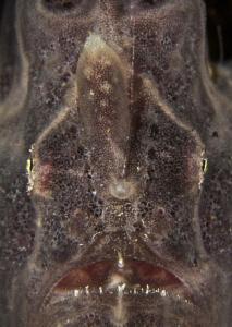 frogface by Doris Vierkötter