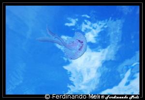 Jellyfish's flight by Ferdinando Meli