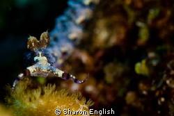 Nudibranch by Sharon English
