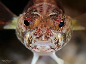 Fish Face... by Iyad Suleyman