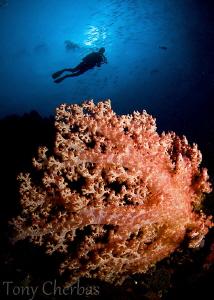 Krakafat, Witu Islands, Papua New Guinea by Tony Cherbas