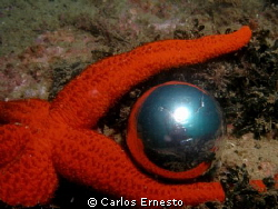 sea star (just creative not manipulated) by Carlos Ernesto