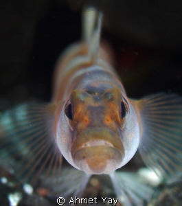Angry fish...