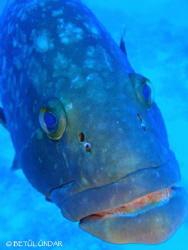 grouper @ Kas by Betül Ündar