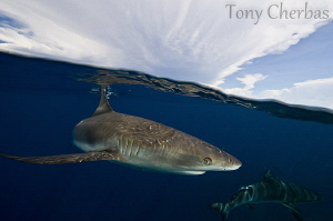 Clear Oceans and Cloudy Skies by Tony Cherbas