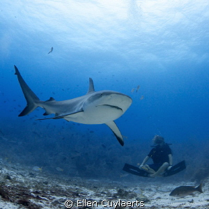 Shark Buddha  While working on conservation and preserv... by Ellen Cuylaerts