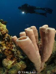 Sponge and diver Canon S100+inon micro-fisheye by Yoav Lavi