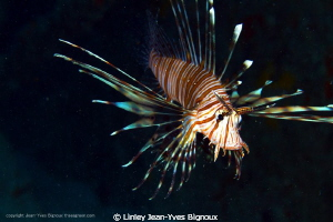 Lion Fish Mauritius -Balaclava -Republic Of Mauritius 15 ... by Linley Jean-Yves Bignoux