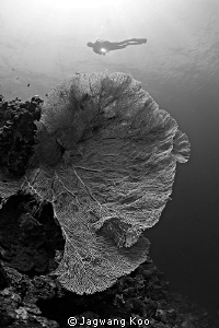 Seafan and Diver by Jagwang Koo
