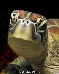 Portrait of a (crying ;-) ) turtle by Andre Philip