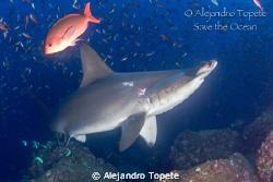 Tiburon Martillo, Galapagos Ecuador Canon 7D, 15 mm, 2 s... by Alejandro Topete