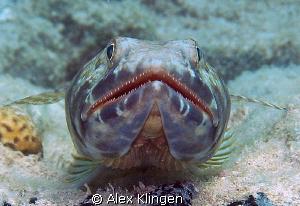 Teeth by Alex Klingen