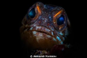 Jawfish by Aleksandr Marinicev