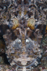 Crocodile fish by Todd Moseley
