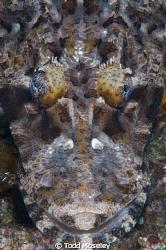 Crocodile fish by Todd Moseley