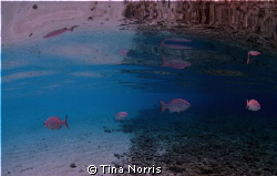 Reflection at Cemetery Beach, Grand Cayman by Tina Norris