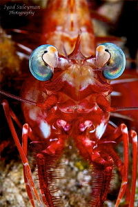 Portrait Shrimp by Iyad Suleyman